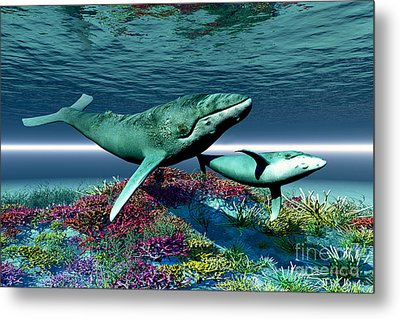 Whale Song Metal Print by Corey Ford