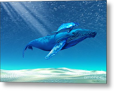 Whales Metal Print by Corey Ford
