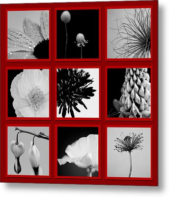 What Is Black And White And Red All Over  Metal Print by Lisa Knechtel