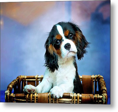 What Metal Print by Patricia Stalter