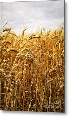 Wheat Metal Print by Elena Elisseeva