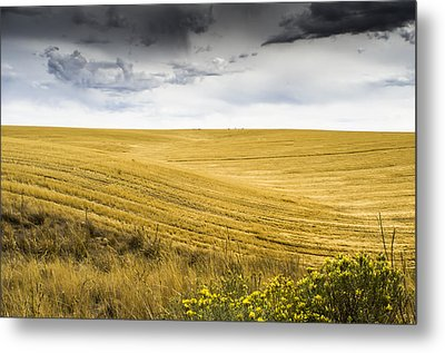Wheat Fields With Storm Metal Print by John Trax