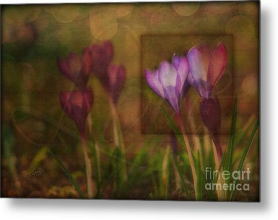 When The Light Paints The Flowers Metal Print by Joy Gerow