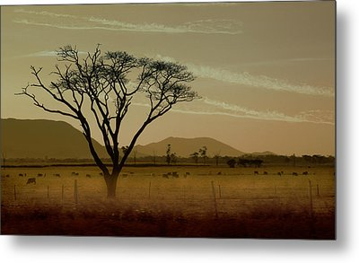 Wherever I May Roam Metal Print by Holly Kempe