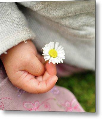 White Daisy In Baby Hand Metal Print by © Mameko