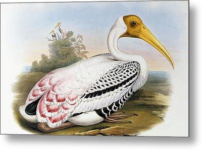 White-headed Ibis, Tantalus Leucocephalus Metal Print by John Gould