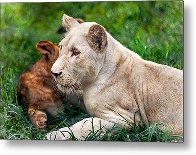 White Lion Cub Metal Print by Jenny Rainbow