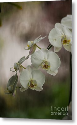 White Of The Evening Metal Print by Mike Reid