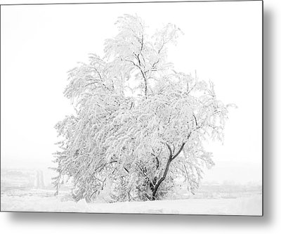 White On White Metal Print by Marilyn Hunt