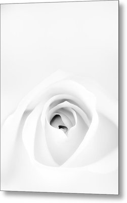 White Rose Metal Print by Scott Norris