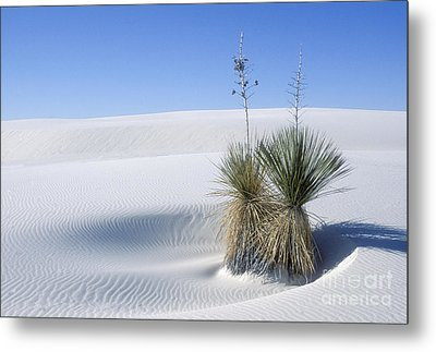 White Sands Dune And Yuccas Metal Print by Sandra Bronstein