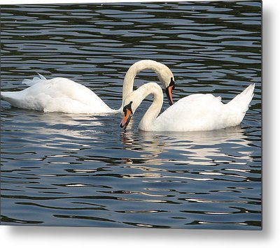 White Swans Metal Print by Joyce Woodhouse