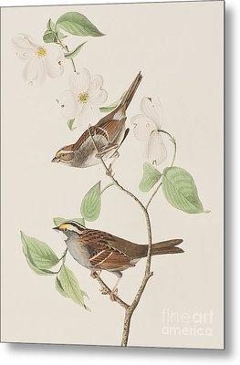 White Throated Sparrow Metal Print by John James Audubon