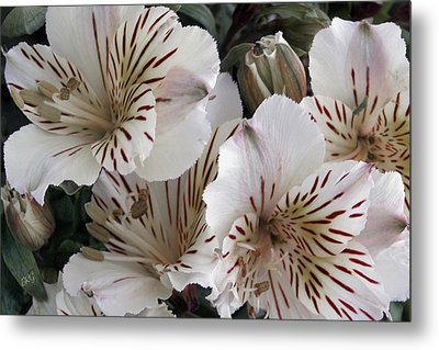 White Tiger Azalea Metal Print by Ben and Raisa Gertsberg