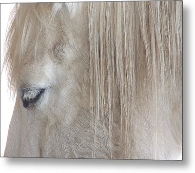 Whiteeyes Metal Print by Todd Sherlock
