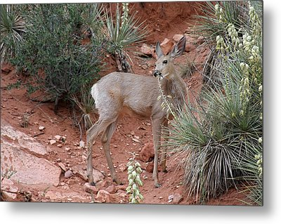 Wild And Pretty - Garden Of The Gods Colorado Springs Metal Print by Christine Till