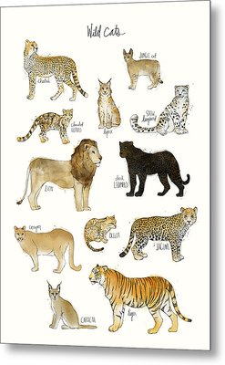 Wild Cats Metal Print by Amy Hamilton