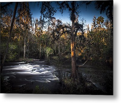 Wild Florida Metal Print by Marvin Spates