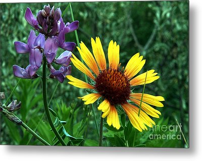 Wild Flowers Metal Print by Mario Brenes Simon