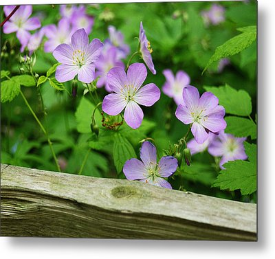 Wild Geraniums Metal Print by Michael Peychich