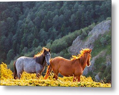 Wild Horses Metal Print by Evgeni Dinev