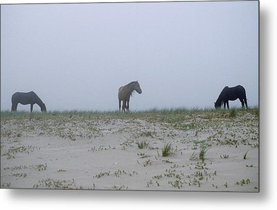 Wild Horses In The Sand Dunes On Sable Metal Print by Justin Guariglia