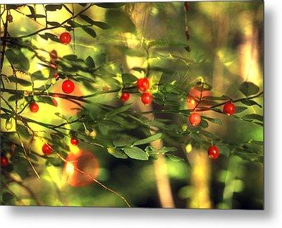 Wild Huckleberries On The Bush Metal Print by Lyle Leduc