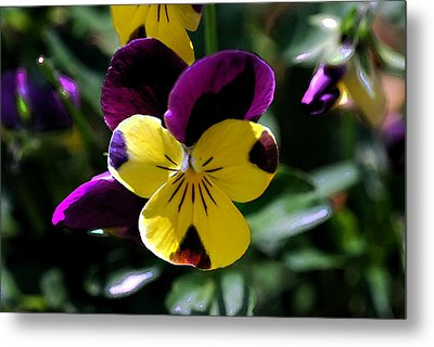 Wild Pansy Metal Print by Don  Wright