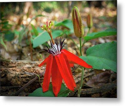 Wild Red Passion Flower Metal Print by Yuka Ogava