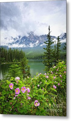 Wild Roses And Mountain Lake In Jasper National Park Metal Print by Elena Elisseeva