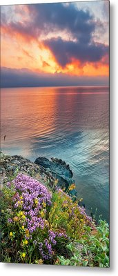 Wild Thyme By The Sea Metal Print by Evgeni Dinev