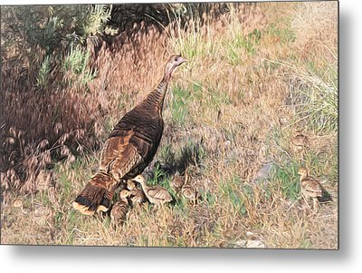 Wild Turkey Hen With Chicks Metal Print by Donna Kennedy