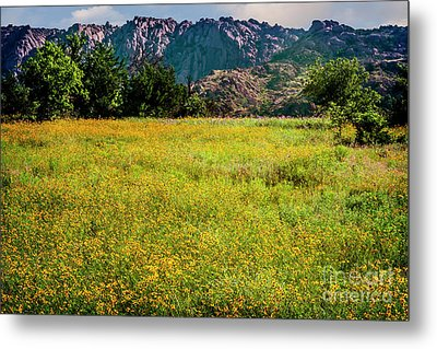 Wildflower Field In The Wichita Mountains Metal Print by Tamyra Ayles