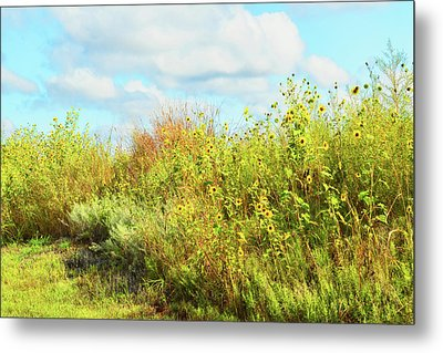Wildflowers Along A Country Road  Photography  Metal Print by Ann Powell