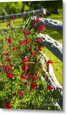 Wildflowers And Rail Fence Metal Print by Thomas R Fletcher