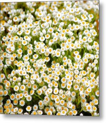 Wildflowers Metal Print by Holly Kempe
