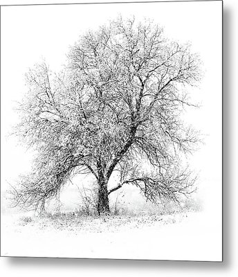 Willow And Blizzard Metal Print by Altus Photo Design