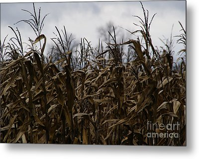 Wind Blown Metal Print by Linda Knorr Shafer