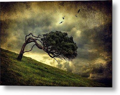 Winds Of Change Metal Print by Peter Elgar