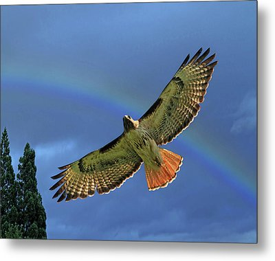 Wings 2 Metal Print by Donna Kennedy