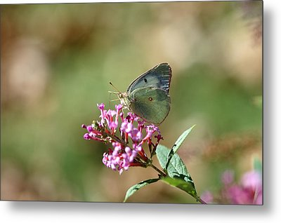 Wings And Petals Metal Print by Betty LaRue
