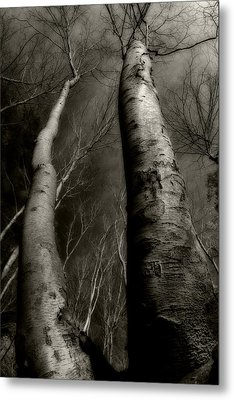 Winter Birch Metal Print by Kim Zier