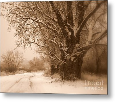 Winter Dream Metal Print by Carol Groenen