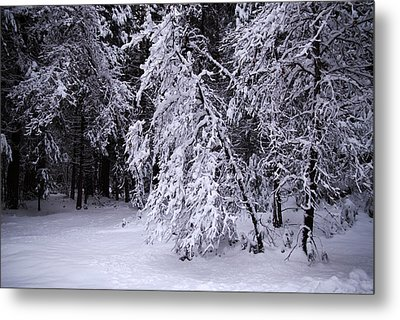 Winter Forest Metal Print by Lee Chon