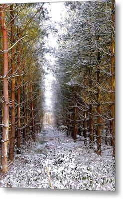 Winter Forest Metal Print by Svetlana Sewell