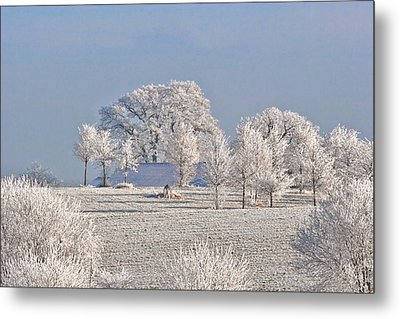 Winter In Canada Metal Print by Christine Till