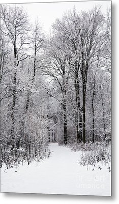 Winter In The Forest Metal Print by Gabriela Insuratelu