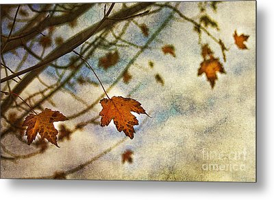 Winter On The Way Metal Print by Rebecca Cozart