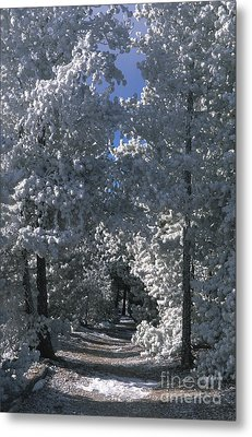 Winter Pathway Metal Print by Sandra Bronstein