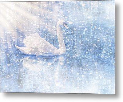 Winter Swan Metal Print by Geraldine DeBoer